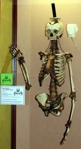 28 - Skeleton 2